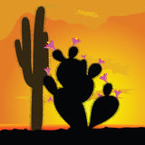 Cactus with pink flower Stock Photos