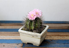 Cactus Royalty Free Stock Photography