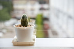 Cactus place on window in office Stock Photo