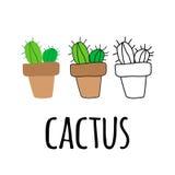 Cactus plano en un pote, planta de la casa Foto de archivo libre de regalías