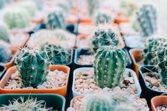 Cactus planté dans des pots - effet de couleur Images libres de droits