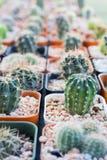 Cactus planté dans des pots - effet de couleur Image stock