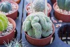 Cactus planté dans des pots - effet de couleur Photo libre de droits