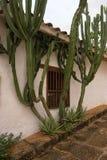 Cactus planté le long du mur de maison dans Barichara Photo stock