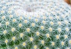 Cactus Plant Stock Image
