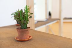 Cactus plant in brown pot in home. Cactus plant in brown pot on wooden table inside home royalty free stock images