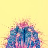 Trendy pastel coloured fashion exotic pop minimal background with cactus plant. royalty free stock photos