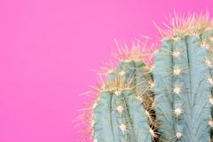 Free Cactus Plant Close Up. Trendy Pastel Coloured Minimal Background With Cactus. Stock Photo - 110276380