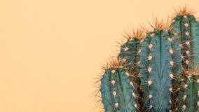 Cactus plant close up. Trendy yellow minimal background with cactus. Stock Photos