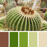 Cactus Plant.  color palette swatches.es Stock Photo