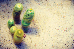 Cactus plant. With copy space stock photos