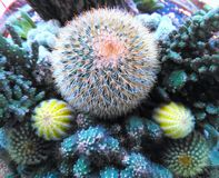 Cactus. Is plant in desert royalty free stock photos