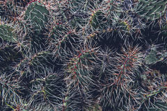 Cactus Plant Expose during Daytime Royalty Free Stock Photos