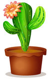 A cactus plant with a flower Stock Photography