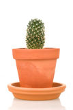 Cactus plant in flower pot isolated on white Stock Images