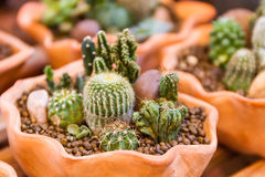 Cactus with plant. Stock Image