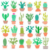Cactus plant and flower vector set. Cacti houseplant Stock Image