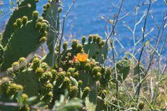 Cactus plant with flower Stock Photography