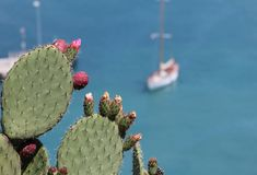 Cactus plant at the french riviera Royalty Free Stock Images