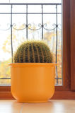 Cactus plant in the house Royalty Free Stock Photography