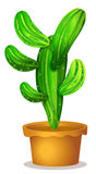 A cactus plant Royalty Free Stock Photos
