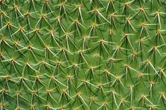 Cactus plant in Mexico desert Stock Photos