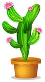 A cactus plant with pink flowers Stock Photography