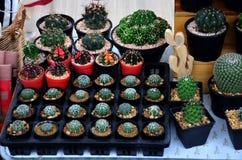 Cactus plant in pot background Stock Photo