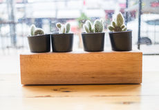 Cactus plant pot decorated wooden table Stock Images