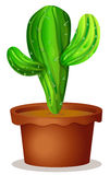 A cactus plant in a pot Stock Photos