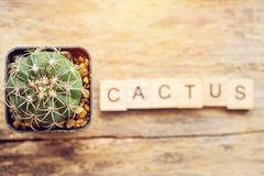 Cactus plant in a pot with text cactus from wooden block Royalty Free Stock Images