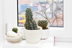 Cactus plant in a pot on a white background. A cactus plant in a pot on a white background Stock Photos