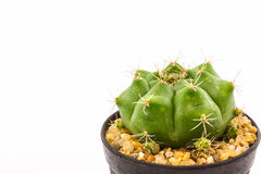 Cactus with plant in a pot. Stock Photos