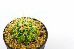 Cactus with plant in a pot. Royalty Free Stock Photos