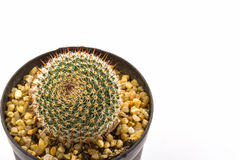 Cactus with plant in a pot . Stock Photography