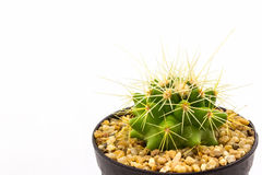 Cactus with plant in a pot. Royalty Free Stock Photography