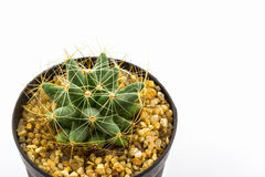 Cactus with plant in a pot. Royalty Free Stock Images
