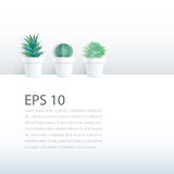 Cactus plant in pot on white background Royalty Free Stock Photos