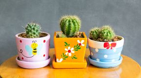 Cactus plant in pots decoration on the table royalty free stock photo