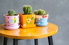 Cactus plant in pots decoration on the table royalty free stock photography