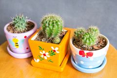 Cactus plant in pots decoration on the table royalty free stock photos