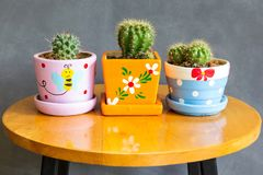 Cactus plant in pots decoration on the table stock image