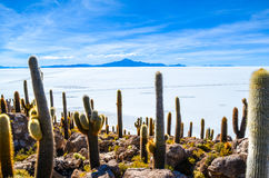 Cactus Plant, Salt Desert, Bolivia. Details of the rocky Fish Island in the middle of Bolivian Salt Flats Royalty Free Stock Images