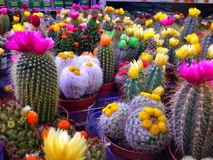 Cactus plant storage Stock Photos