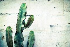 Cactus, Plant, Thorn, Green, Nature Royalty Free Stock Photos