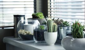 Cactus Plant on Top White Table Stock Image