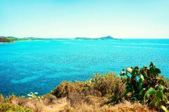 Cactus plant in Villasimius and the Bay of the Blue Waters of the Mediterranean Sea on Sardinia Island in Italy in summer. Cagliari region royalty free stock photography