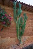 Cactus plantado a lo largo de la pared de la casa en Barichara Fotos de archivo libres de regalías