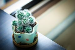 Cactus planted. In the building Stock Photography