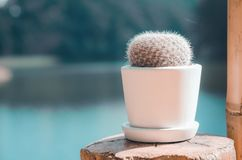 Cactus planted in pots stock photos